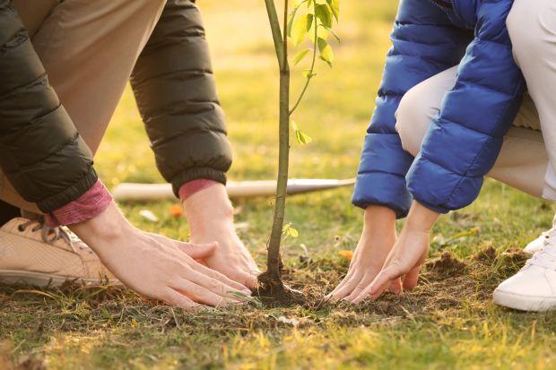 Prace w ogrodzie - jesienne sadzenie drzew