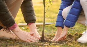 Listopad to najbardziej optymalny czas do wykonywania nasadzeń. Gleba jest wtedy odpowiednio wilgotna, a temperatura panująca na zewnątrz pozwala jeszcze na wstępne zakorzenienie się roślin.