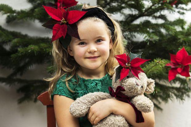 Gwiazda betlejemska - udekoruj dom na Boże Narodzenie