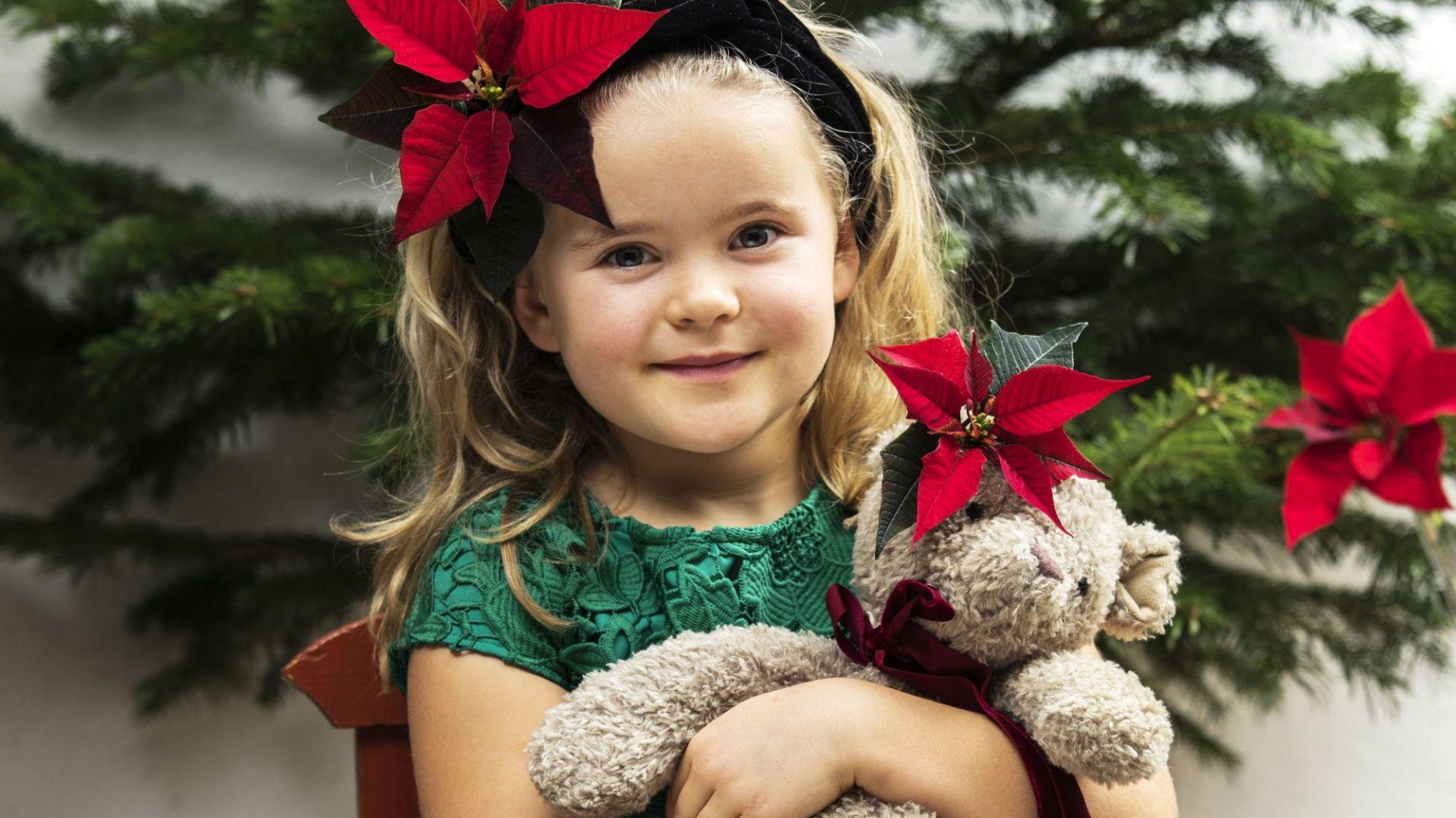 Gwiazda betlejemska to idealny kwiat do bożonarodzeniowych dekoracji. Fot. Stars for Europe