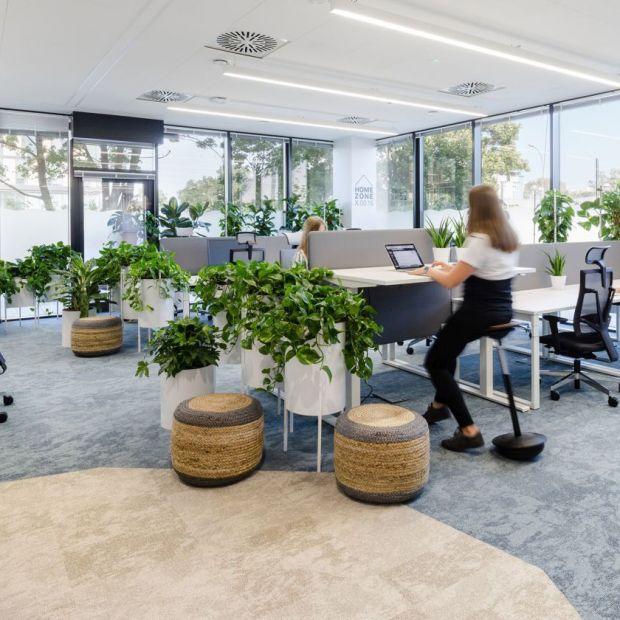 Zdrowa przestrzeń pracy - użyj roślin!