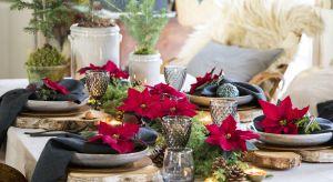 Pomysły na świąteczne dekoracje stołu z gwiazdą betlejemską prezentują różnorodność i zdolność przemiany tej rośliny i zachęcają do powielania.
