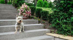 Kiedy twoja posesja odznacza się zróżnicowanym ukształtowaniem terenu, prawdopodobnie nie unikniesz konieczności zastosowania schodów zewnętrznych.