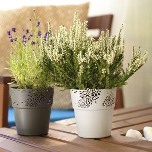 Rośliny w domu: efektowne doniczki i osłonki. Fot. Galicja dla Twojego Domu
