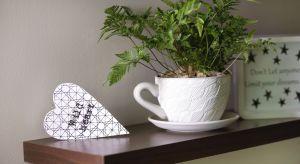 Rośliny doniczkowe pasują do każdego wystroju, idealnie komponują się z naturalną stylistyką, a tę bardziej surową, minimalistyczną znakomicie ocieplają, wprowadzając do salonu czy sypialni przyjazny klimat.