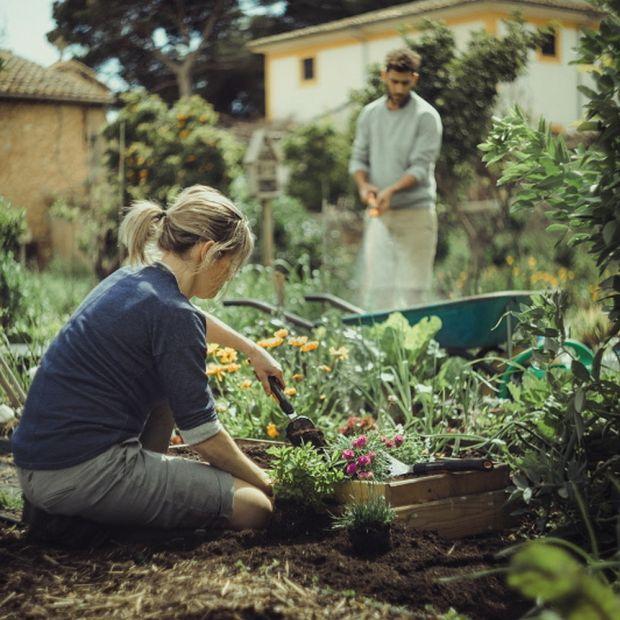 Zakładanie rabat kwiatowych - praktyczne porady