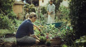 Trudno wyobrazić sobie ogród bez pięknych rabat kwiatowych. Dobrze zaprojektowane i wypielęgnowane są prawdziwą dumą właścicieli.