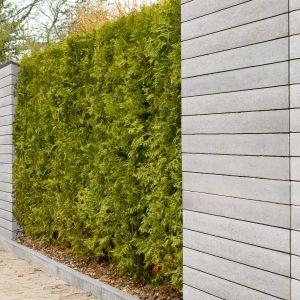 Ogrodzenie z bloczków Polbruk Neo - montaż z zielenią. Fot. Polbruk
