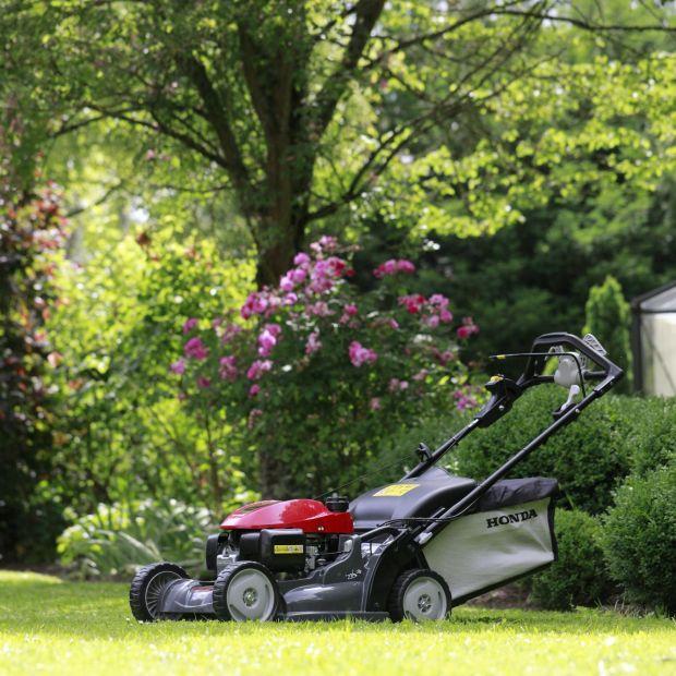"""Wiosna w ogrodzie. Jak osiągnąć efekt """"angielskiego"""" trawnika?"""