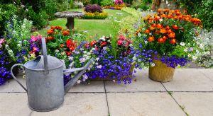 Wiosna w rozkwicie, czyli nadszedł czas, aby zadbać o ogród. To ostatni moment na to, żeby zaprowadzić w nim ład i nadać niepowtarzalny klimat.Podpowiadamy, co będzie modne w tym sezonie.
