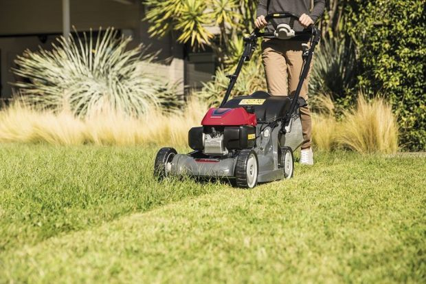 Trawnik po majowych deszczach - jak o niego zadbać