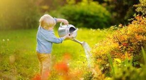 Podczas upałów trawa szczególnie potrzebuje życiodajnej wody. Mocne słońce powoduje obumieranie oraz żółknięcie trawy. Zachowanie pięknego trawnika w takich warunkach wymaga specjalnego traktowania, ale trzymając się 3 prostych wskazówek bę