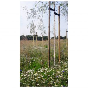 Projektując ogród można niepoprawnie zaplanować roślinność pod względem wielkościowym, nie biorąc po uwagę wymagań świetlnych poszczególnych gatunków, co zemści się w późniejszym czasie kiepskim przyrostem. Projekt ogrodu: Dominika Błaszczyk. Fot. Dominika Błaszczyk