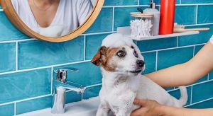 Urządzasz łazienkę lub planujesz jej remont? To tu najczęściej się relaksujesz, dbasz o urodę i pielęgnujesz ciało. Stwórz przestrzeń na miarę jej najważniejszych funkcji, odzwierciedlającą twoje upodobania, gust i styl całego domu.