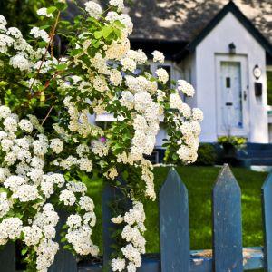 Polskie ogrody - zobacz jak je urządzono. Fot. Shutterstock