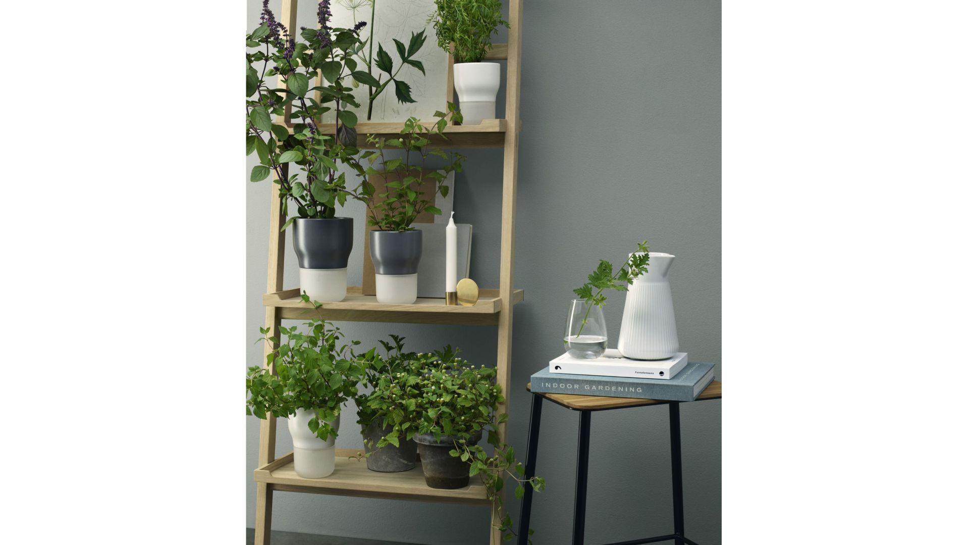 Rośliny W Domu 10 Oryginalnych Pomysłów