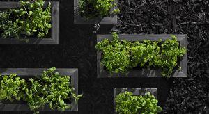 Mieszkasz w bloku, ale marzysz o własnym ogródku? Nic straconego! W piękny, zielony zakątek można przemienić nawet niewielki miejski balkon.