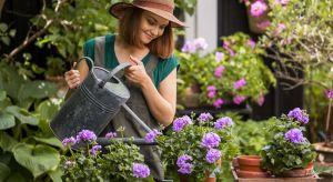 Latem każda praca w ogrodzie to prawdziwa przyjemność. Zasadź kwiaty, zadbaj o nawierzchnie i meble, zainstaluj oświetlenie, a ogród wspaniale Ci się odwdzięczy. Także przydomowy taras czy balkon może stać się miejscem wymarzonego relaksu, gdy