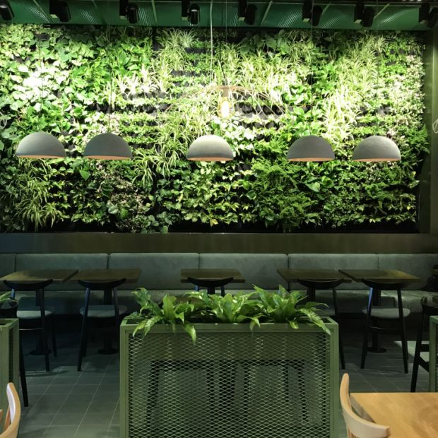 Ogrody wertykalne i zielone dachy remedium na kryzys klimatyczny
