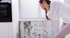 Obecność grzyba w mieszkaniu stanowi dla człowieka poważne zagrożenie. Jeśli się pojawi, należy się go jak najszybciej pozbyć i zabezpieczyć ściany przed ewentualnym powrotem niechcianego gościa.