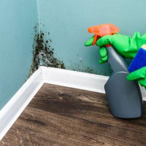 Zabezpieczamy ściany przed grzybem. Fot. CIQ
