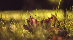 Końcówka września – to idealny moment, by zacząć przygotowywać ogród na zimę, jednocześnie nie zapominając o standardowych zabiegach pielęgnacyjnych. O czym zatem należy pamiętać? Przedstawiamy 4 czynności, które warto wykonać w ogrodzi