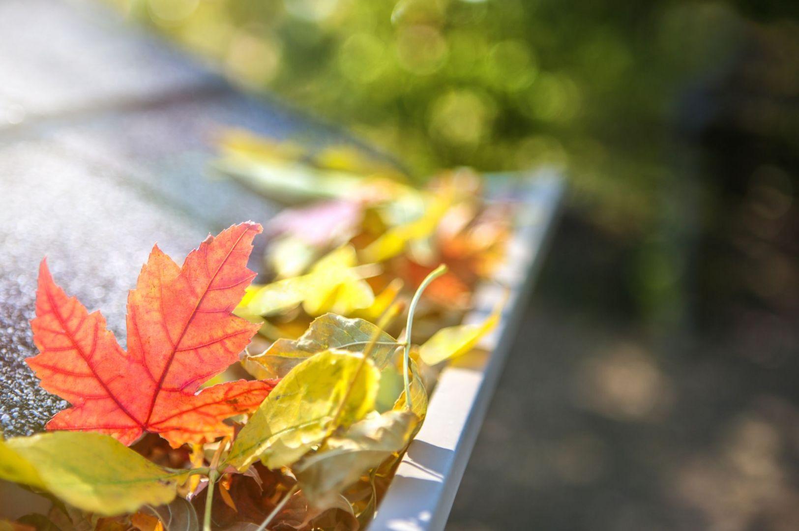 Jesienne porządki w ogrodzie: zbieramy liście. Fot. Shutterstock