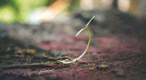 Jak użytkować ziemię, aby zmniejszyć nasz wpływ na klimat? Jak przeciwdziałać erozji gleb i utracie zdolności ekosystemów do pochłaniania węgla? Jak zapewnić bezpieczeństwo żywnościowe 500 milionom ludzi, mieszkającym na obszarach dotknię