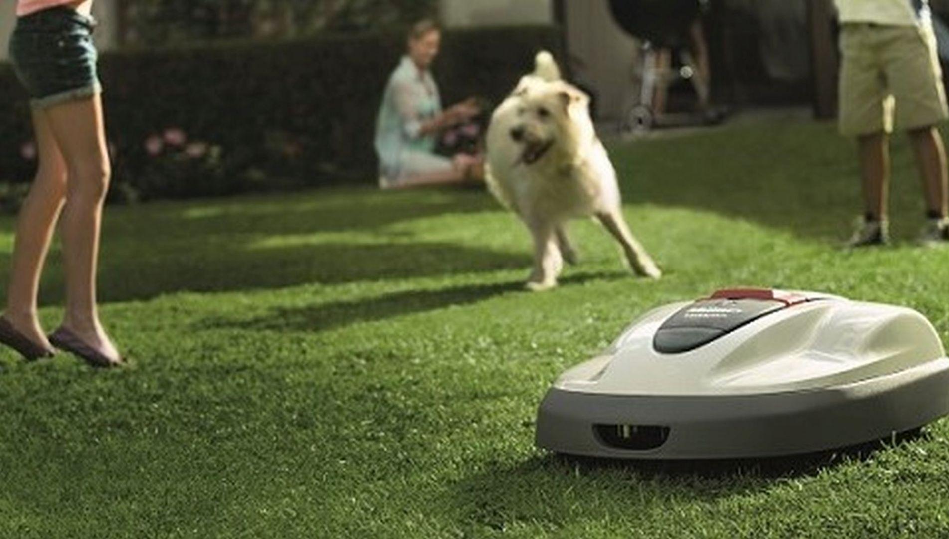 Zakładanie trawnika jesienią. Robot koszący Honda Miimo. Fot. Honda