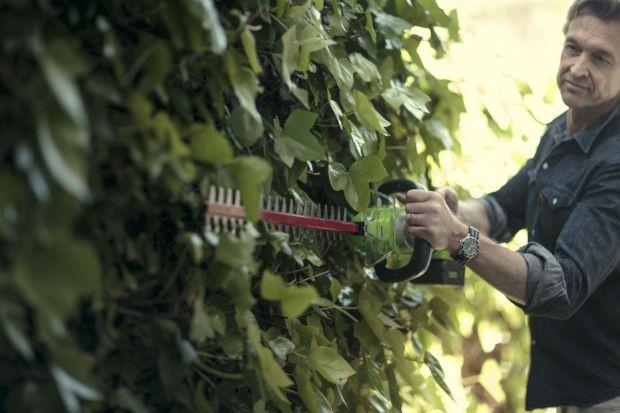 Jabłka, śliwki, gruszki, maliny i jeżyny zebrane? Pora na cięcie gałązek. Po co? By drzewa i krzewy rozwijały się prawidłowo. I żeby dawały bardziej obfite plony. Ważne, byśmy cięli je w odpowiedni sposób i właściwymi narzędziami.