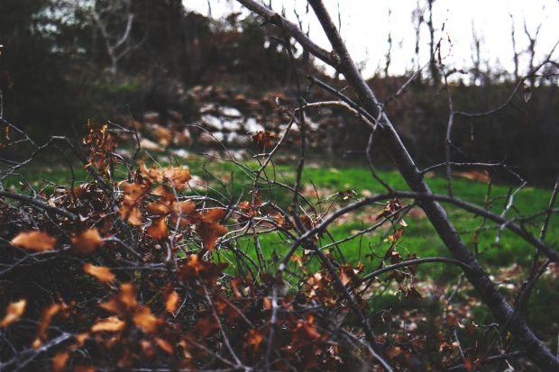 Jesienne przycinanie drzew i krzewów - 4 ważne zasady