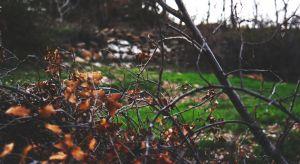 Wczesna jesień to ważny moment w kalendarzu każdego ogrodnika. Od jakości przeprowadzonych prac zależy bowiem późniejsza kondycja naszego ogrodu. Jedną z nich jest przycinanie drzew i krzewów.