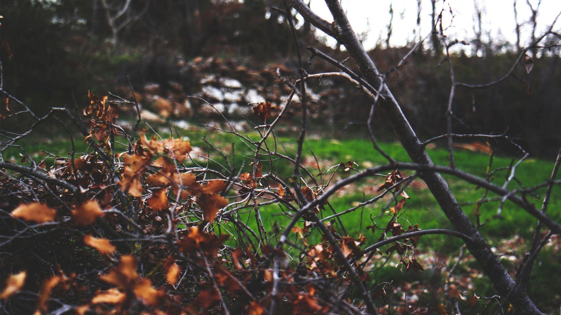 Jesienne przycinanie drzew i krzewów. Fot. Krysiak