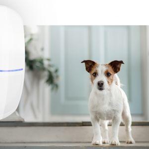 Czujka Slim-Pir-Pet/Satel. Produkt zgłoszony do konkursu Dobry Design 2020.