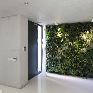 Wyjątkową dekoracją jest ściana zieleni w holu – kompozycja zbudowana z blisko 250 roślin. Projekt: arch. Hanna i Seweryn Nogalscy, Beton House Architekci. Fot. Bartosz Jarosz