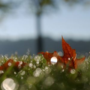 Ostatnie koszenie trawnika jesienią. Fot. Krysiak