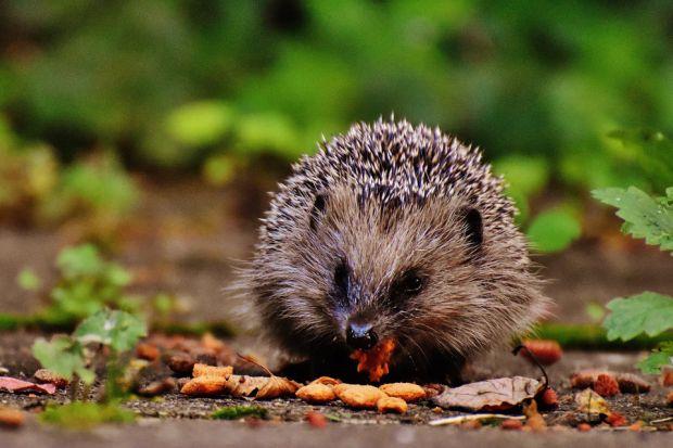 Ogród jesienią i zimą - jak pomóc zwierzętom przetrwać chłody