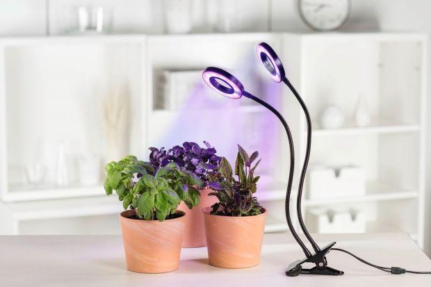 Lampy led: sposób na piękne rośliny jesienią i zimą