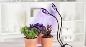 Roślinywymagają odpowiedniego oświetlenia o każdej porze roku. O ile wiosną czy latem wystarczają im promienie słoneczne, które wpadają do pomieszczenia, tak jesienią czy zimą należy zapewnić im dodatkowe źródło światła, dzięki które