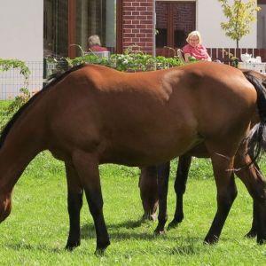 Koń to na wsi symbol szczególny. W krajobrazie śląskiej wsi po prostu nie może go zabraknąć.