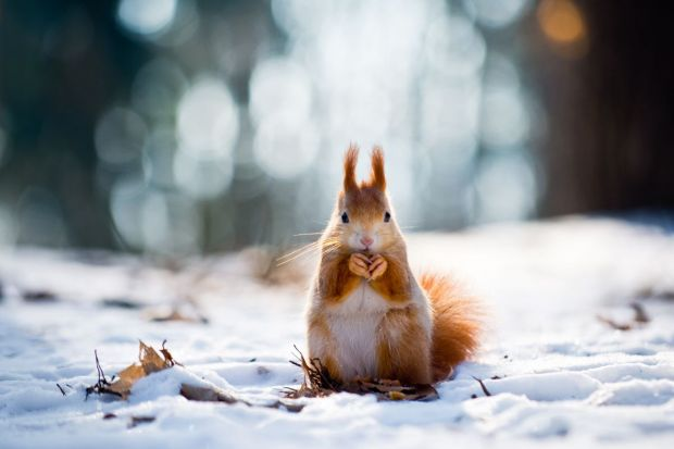 Ogród zimą kojarzy się z oszronionymi drzewami i przyprószoną śniegiem trawą – to sprawia, że nie przyciąga nas do siebie tak bardzo, jak latem. Jak sprawić, aby zachęcał nas do zimowych spacerów i cieszył nasze oko? Oto kilka wskazówek!&