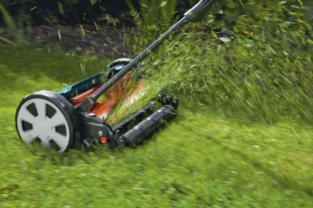 Wiosna to czas uporządkowania ogrodów po sezonie zimowym. Grabimy liście, przycinamy krzewy i kosimy trawniki. Ta ostatnia czynność jest kluczowa, aby zachować ogród w dobrej formie. Jednak żeby tego dokonać powinniśmy wybrać odpowiednią kosia