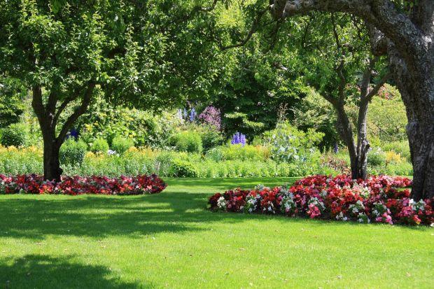 Piękny, zadbany i bujny ogród jest marzeniem każdego miłośnika zieleni. Szczególnie wiosną chcemy spędzać w nim swój wolny czas, kiedy kwitną wszystkie rośliny. Nadają one koloru naszemu ogrodowi, a przy tym pięknie pachną.