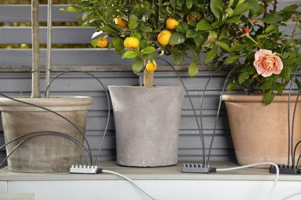 Jeśli nie masz wystarczająco dużo czasu na pielęgnację ogrodu lub posiadasz balkon i na prawdziwy ogród nie masz miejsca, zrób swój miniaturowy ogród w donicy. Niewątpliwie paleta barw kwiatów sprawi, że nasze otoczenie będzie świeższe i pe