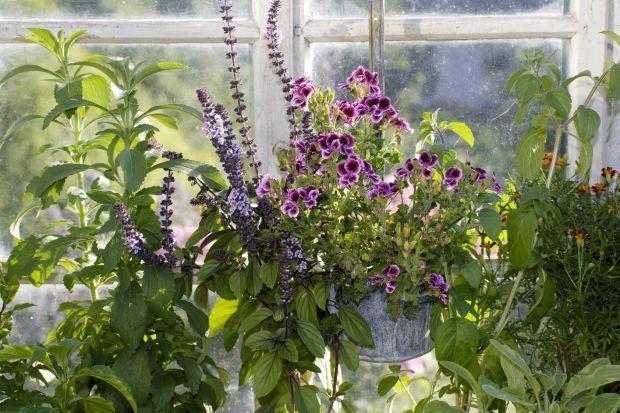 Wyhodowane, umieszczone w osłonach zioła lub kwiaty możemy kupić dziś niemal na każdym bazarku, ale największą przyjemność sprawiają te, uprawiane samodzielnie. Możemy to robić nawet, jeśli nie mamy własnego ogrodu, umieszczając rośliny w