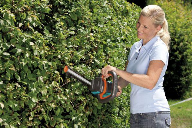 Wiele osób myśli, że w okresie zimowym można zapomnieć o obowiązkach związanych z pracą w ogrodzie. Nic bardziej mylnego. Aby zapewnić naszym roślinom prawidłowy rozwój, musimy pielęgnować je przez cały rok. Styczeń to na ogół najzimniej