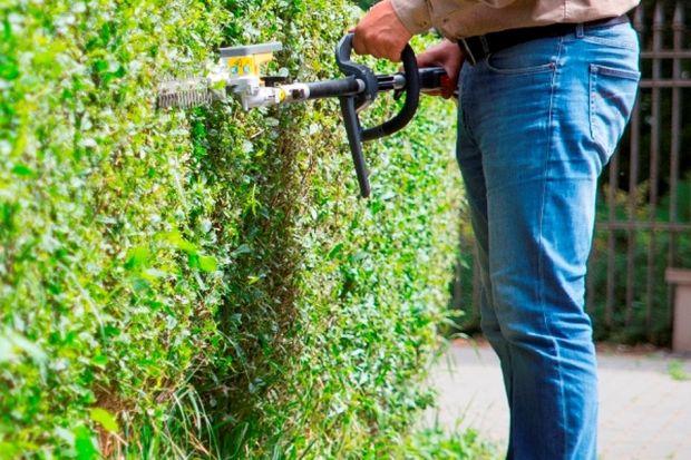 Miłośnicy i właściciele ogrodów z doświadczeniem wiedzą, że cięcie żywopłotu i krzewów ma istotne znaczenie dla utrzymania roślin w zdrowej kondycji, ponieważ sprzyja ich zagęszczeniu i poprawia estetyczny wygląd. Przycinanie gałęzi drze