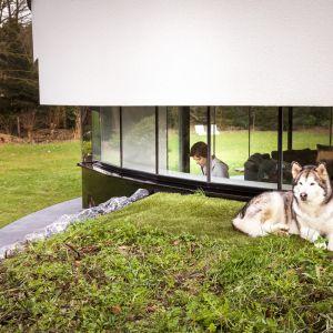 Zewnętrzna bryła domu została dostosowana do potrzeb psów. Architekci zaprojektowali specjalny baldachim biegnący wokół domu. Jego zadaniem jest zapewnienie schronienia zwierzętom. Fot. Hannah Anthonysz
