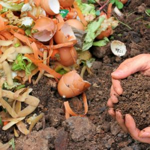 Kompost z odpadów organicznych. Fot. Kernau