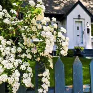 Dane ze stacji pogodowej w połączeniu z automatyką nawadniającą gwarantują zarówno piękny wygląd roślin, jak i całego ogrodu. Sprzyja również oszczędzaniu wody, działa bowiem tylko wtedy, gdy jest naprawdę potrzebne. Fot. Shutterstock